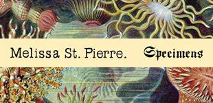 """MELISSA ST. PIERRE, """"Fig. VIII"""""""